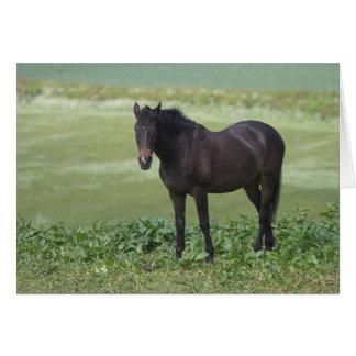 Horse Grazing Card