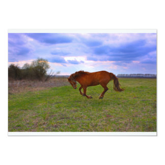 Horse Grazing in a field taken in spring Card