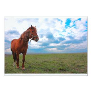 Horse Grazing in a field taken in spring 5x7 Paper Invitation Card