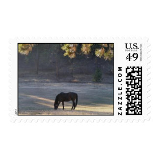 Horse grazing in a pasture stamp