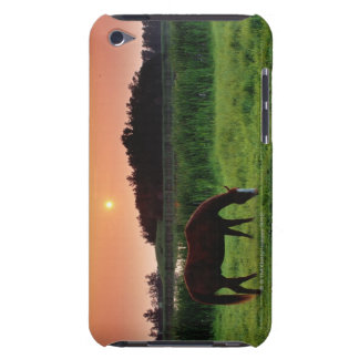 Horse Grazing in Field at Sunset Near Edmonton, Case-Mate iPod Touch Case