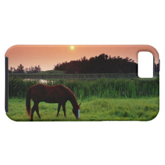 Horse Grazing in Field at Sunset Near Edmonton, iPhone SE/5/5s Case