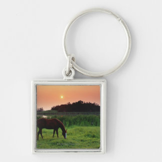 Horse Grazing in Field at Sunset Near Edmonton, Silver-Colored Square Keychain