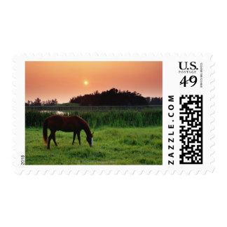 Horse Grazing in Field at Sunset Near Edmonton, Stamp