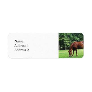 Horse Grazing in Pasture Label