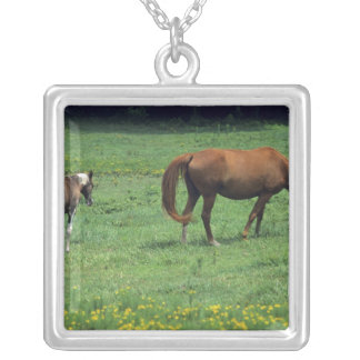 Horse grazing in pasture with colt. pendant