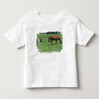 Horse grazing in pasture with colt. toddler t-shirt