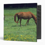 Horse grazing in pasture with colt. vinyl binder