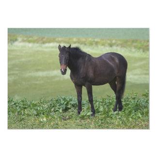 Horse Grazing Invitation