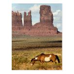 Horse Grazing, Monument Valley, UT Postcard