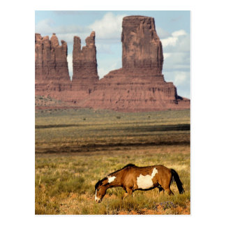 Horse Grazing, Monument Valley, UT Postcards