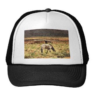 Horse grazing, Monument Valley, UT Trucker Hat