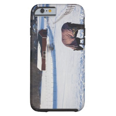 Horse grazing on a snow-covered field on Ekero 2 Tough iPhone 6 Case