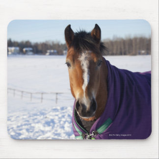 Horse grazing on a snow-covered field on Ekero Mouse Pad