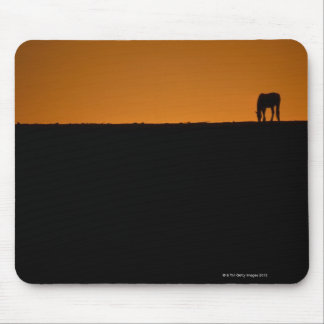 Horse grazing on Kentucky farm Mouse Pad