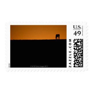 Horse grazing on Kentucky farm Postage