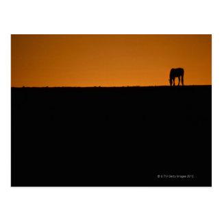 Horse grazing on Kentucky farm Postcard
