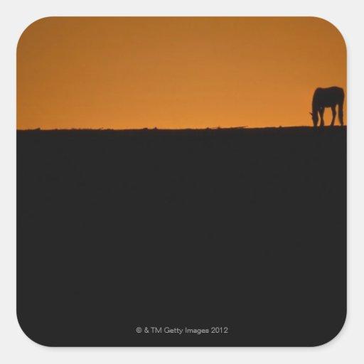 Horse grazing on Kentucky farm Square Sticker