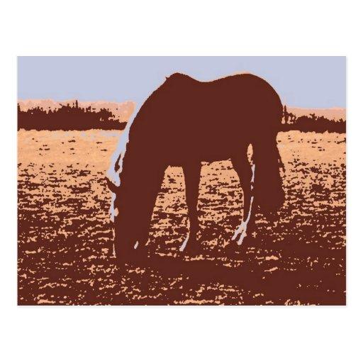 Horse Grazing Pop Art Postcards