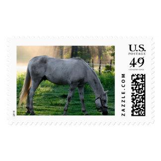 Horse Grazing Postage
