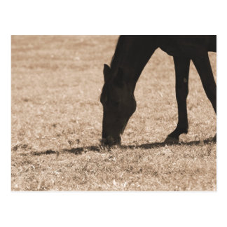 Horse Grazing Silhouette Post Card