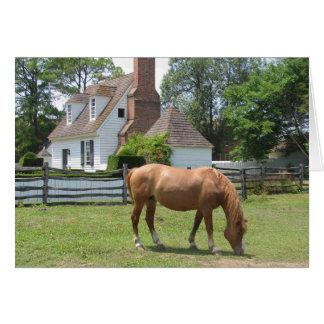 Horse Grazing Williamsburg, Virginia Card