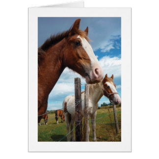 Horse Greeting Card for All Occasions