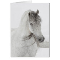 Horse Greeting Card - Mischievous Snowy Mare