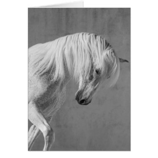 Horse Greeting Card - TheWhite Stallion Looks Down