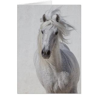 Horse Greeting Card - White Stallion Runs Up