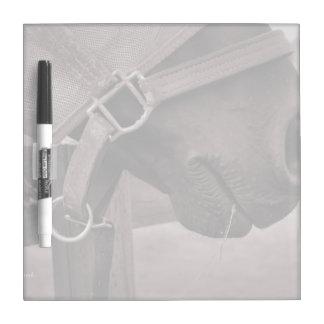 Horse halter muzzle hay grass sepia dry erase board