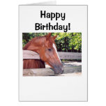 Horse, Happy Birthday! Greeting Cards