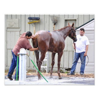 Horse Haven-Oklahoma Training Track Photo Print