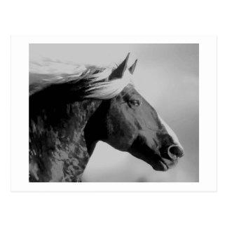 Horse Head Black & White Postcard