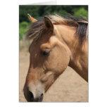 Horse Head Cards