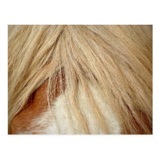 Horse head closeup post cards