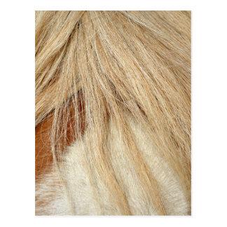 Horse head closeup postcard