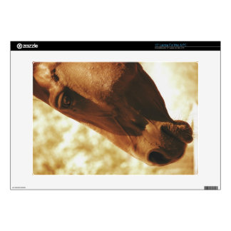 Horse Head in Warm Tones animal photo portrait Decal For Laptop
