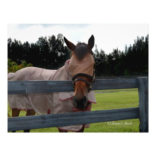 """Horse head on over fence fly mask 8.5"""" x 11"""" flyer"""