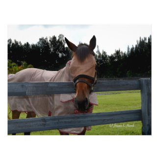 Horse head on over fence fly mask flyers