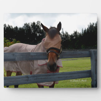 Horse head on over fence fly mask plaque