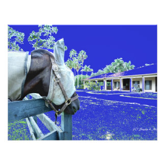 horse head over fence blue colored custom flyer