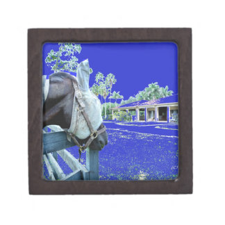 horse head over fence blue colored gift box