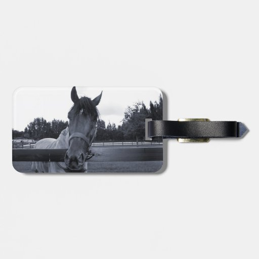 Horse head over fence head on bw bag tags