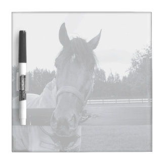 Horse head over fence head on bw dry erase board