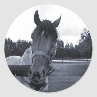 Horse head over fence head on bw round sticker