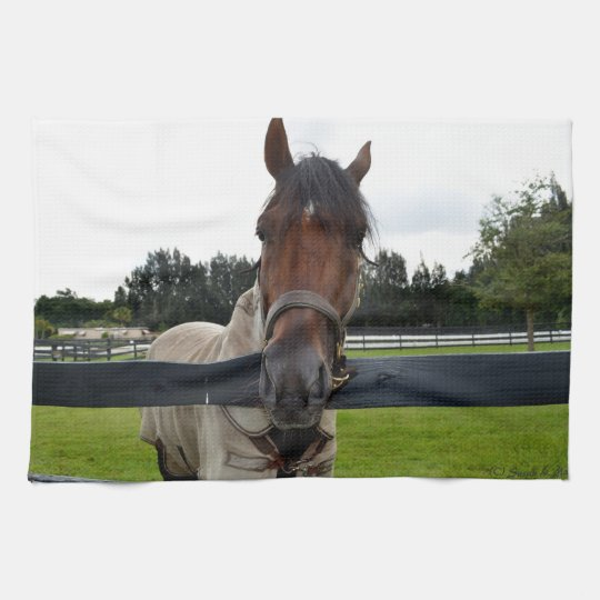 Horse head over fence head on kitchen towel