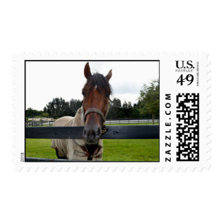 Horse head over fence head on stamp