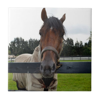 Horse head over fence head on small square tile