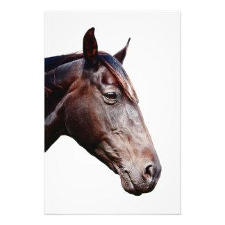 Horse head. photo art